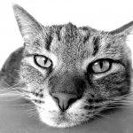 ネコ好きさんに贈る!猫にまつわる英語の表現12選