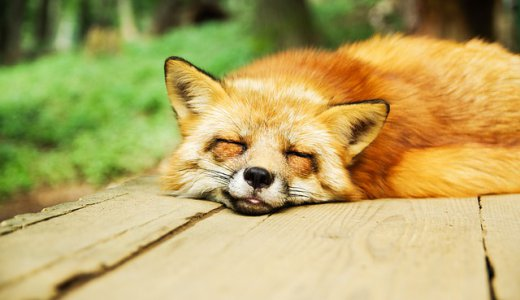 睡眠負債って英語でどういうの?睡眠にまつわる英語をご紹介!