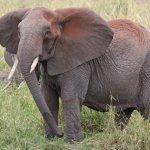 英語表現の幅を広げる!動物のイディオム7選 Part1