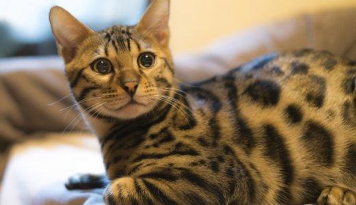 猫好きなあなたの心にグッとくる。猫にまつわる英語の名言Part2