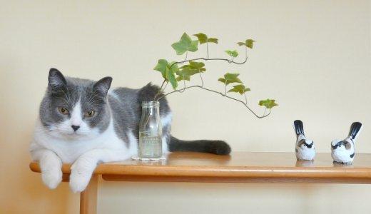 猫好きなあなたの心にグッとくる。猫にまつわる英語の名言集
