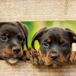 犬好きな人必読!犬にまつわる英語の名言集