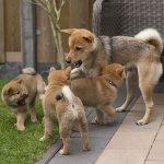 犬好きな人必読!犬にまつわる英語の名言集Part2