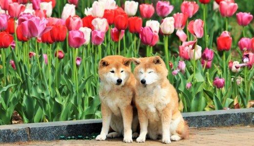 犬好きな人必読!犬にまつわる英語の名言集Part3