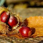 【秋と言えば…?】秋の風物詩は英語でなんて言うの?